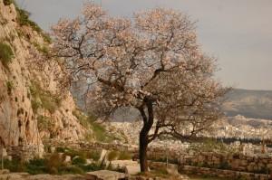 Atenas- Acrópolis 15-2-07 (42)