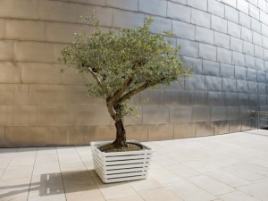 Wish-Tree-560x420