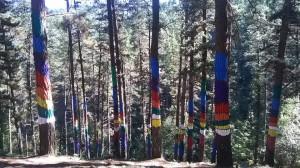 El Bosque de Oma, uno de los lugares favoritos de Ellie