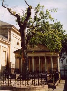 Gernika_Tree_2003